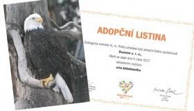 DuoVize je adoptivním rodičem orla v Zoo Praha