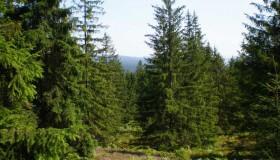 Slavíme Mezinárodní den lesů